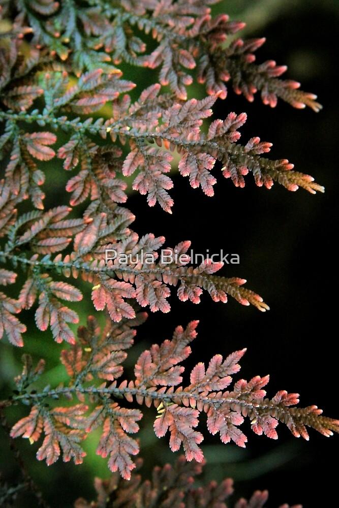 Leaves by Paula Bielnicka