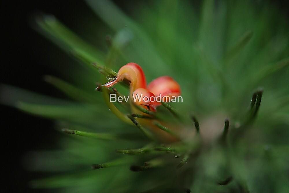 Native Beauty by Bev Woodman
