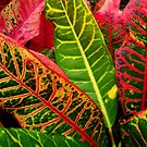Beautiful Leaves on the Sunshine Coast, Australia by Angela Gannicott