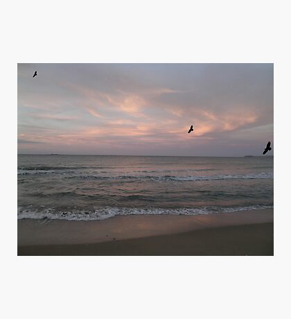 muted whispers of the songs of the seabirds Photographic Print