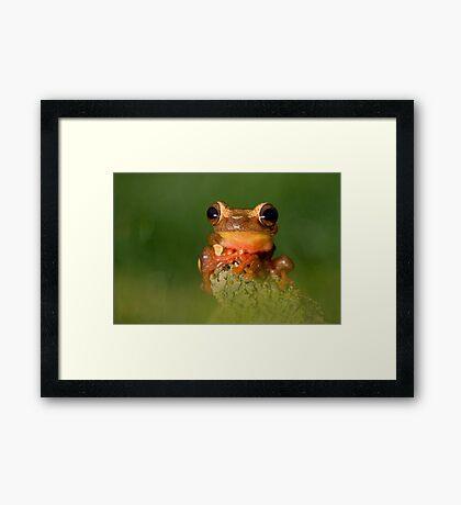 The Clown frog Framed Print