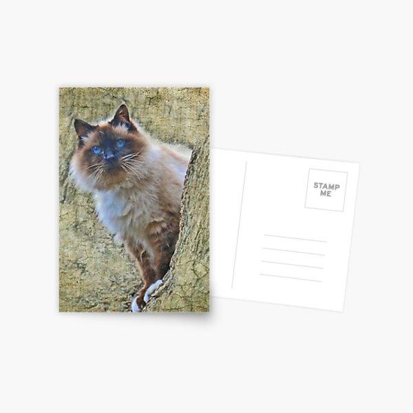 """Mr Blue Eyes ..."" Postcard"