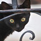 Black Cat by Kasia Nowak