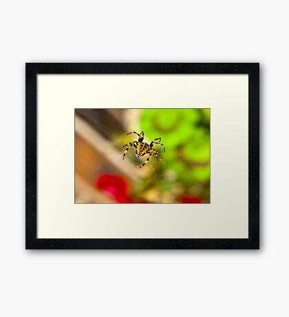 Spider Close-up Framed Print