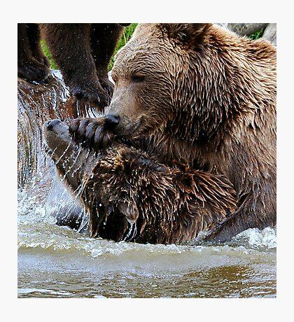 Bear games Photographic Print