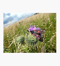 6-Spot Burnet Moth? Photographic Print