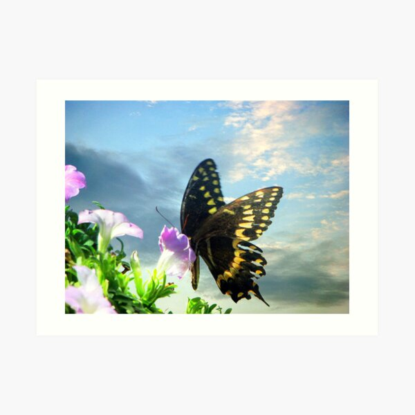 Butterfly in the Sky Art Print
