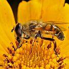 Pollination 15 by Gareth Jones