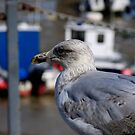 Seagull at Folkestone Harbour, Kent by David Carton