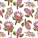 King Protea Delight by h-creative