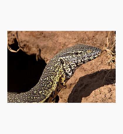 Nile Water Monitor Close Up Photographic Print