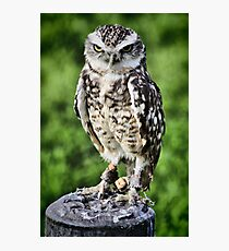 Burrowing Owl Photographic Print