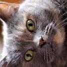 Curious glances by Febev