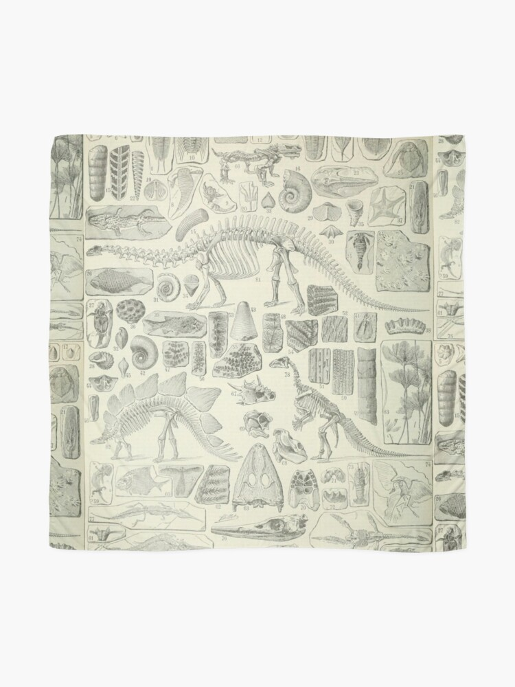 Alternate view of Fossil Chart Scarf