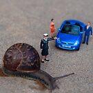 Stop: Snail Crossing by Mark Wilson