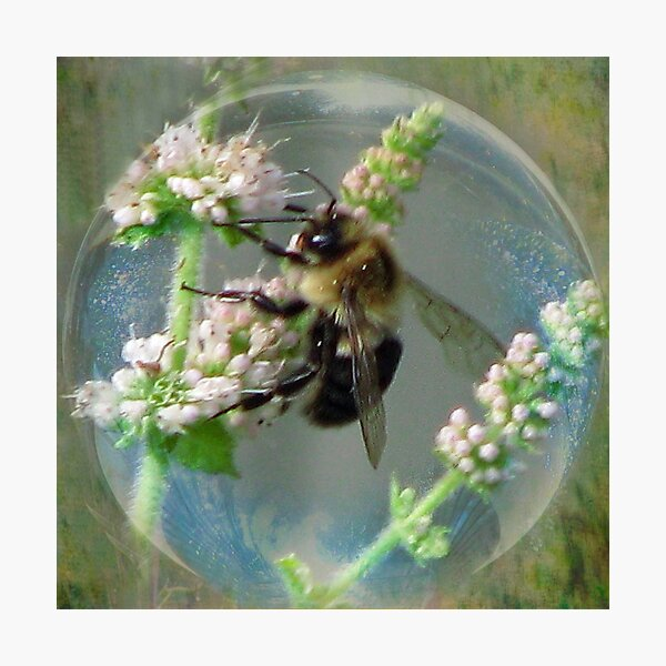 Bubble Bee Photographic Print