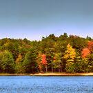 Lake Whittemore in Autumn by Monica M. Scanlan