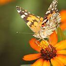Butterfly Side pose by vasu