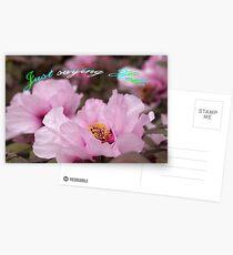 Pink Tree Peonies  Postcards