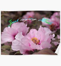 Pink Tree Peonies  Poster