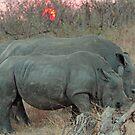 Rhino sunset by jozi1