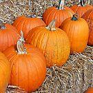 Pumpkin Parade by MarjorieB