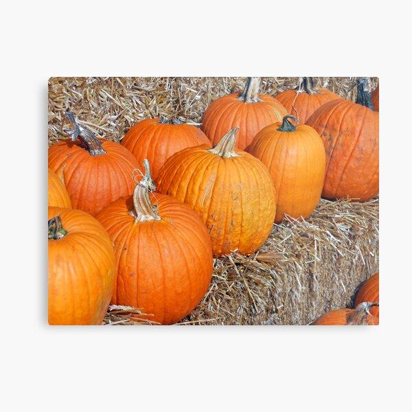 Pumpkin Parade Metal Print