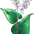 «Planta de alforfón acuarela» de Ekaterina Glazkova