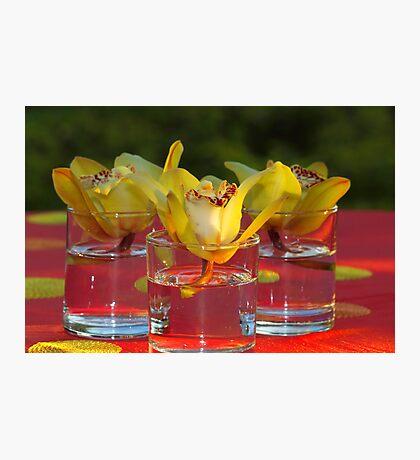Water Flower! Photographic Print