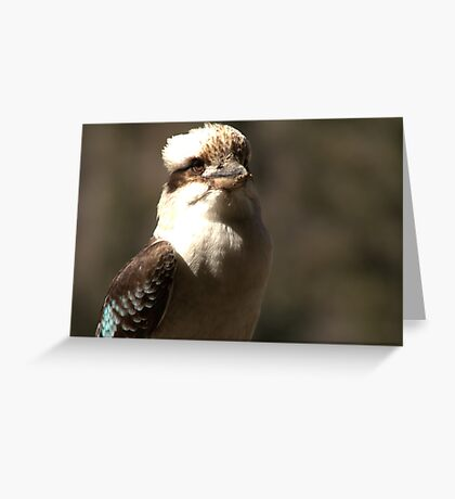 Kookaburra Dreaming Greeting Card