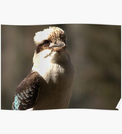 Kookaburra Dreaming Poster