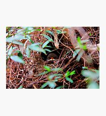 Angry birds Photographic Print