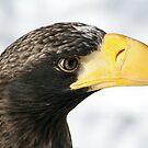 Steller's Sea Eagle  by Larry Trupp