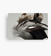 Duck Down - Feather Detail Canvas Print