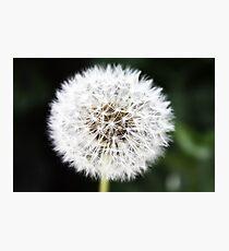 Make A Wish, Dandelion. Photographic Print