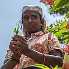 Sri Lanka. Landschaft. Teepflücker. Porträt. von vadim19