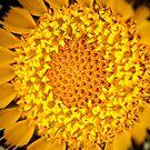 Wildflower by Emjay01