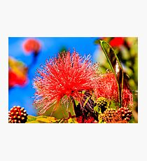 Red Flower macro Photographic Print