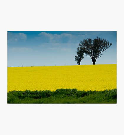 A field of gold #2 Photographic Print