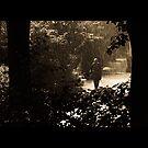 Through the rain by Daniel Martens