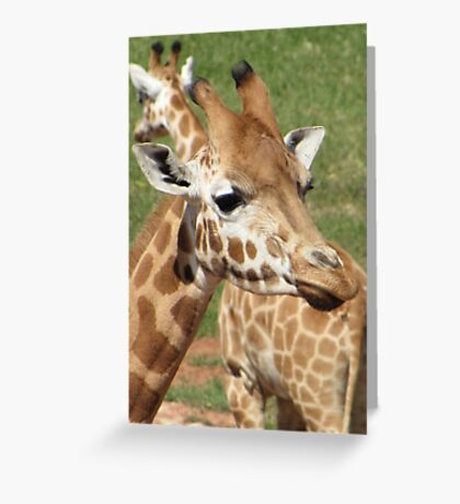 Giraffes - which way should we go? Greeting Card