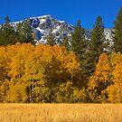 High Sierra Fall by Justin Baer