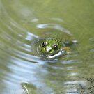 Frosch in der Pfütze von TheVioletWitch