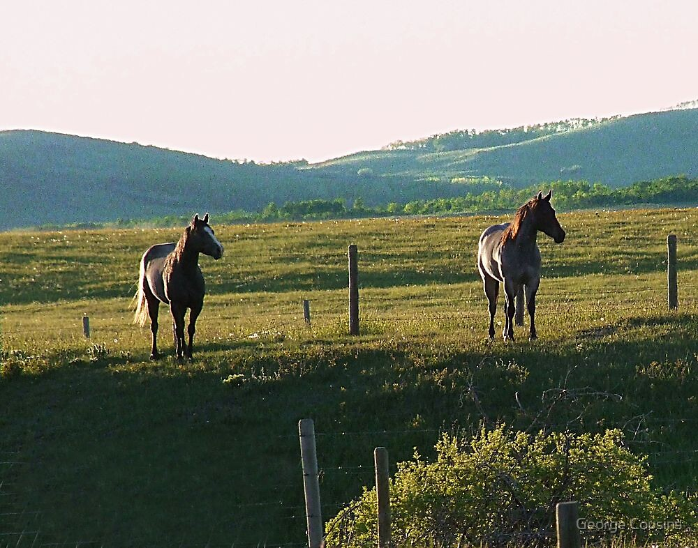 Horses at Sunset by George Cousins