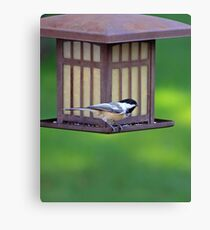 The Humble Sparrow Canvas Print