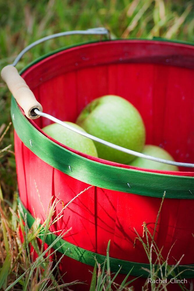 Apple Picking  by Rachel  Clinch