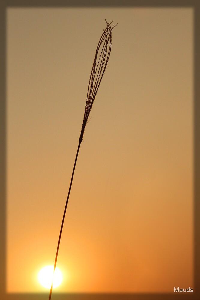 Sunrise  by Mauds