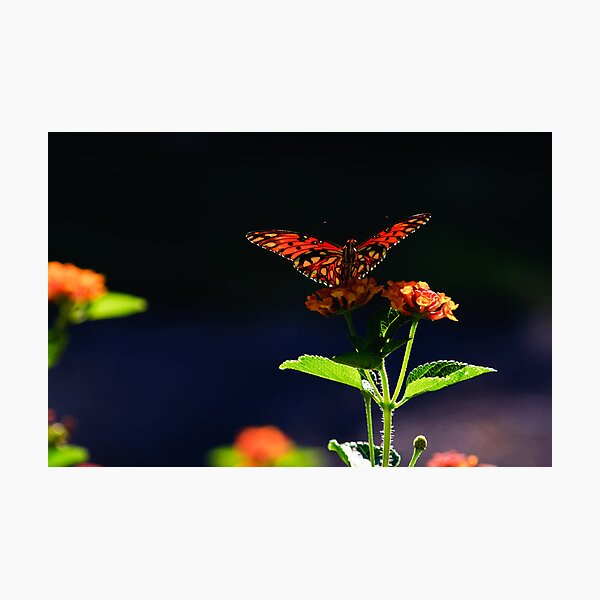 As gentle as a butterfly Photographic Print