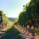 Upper Vineyard at Cedar Creek Estate Winery by Gregory Ewanowich