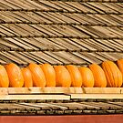 Pumpkin Pattern by Tracy Riddell